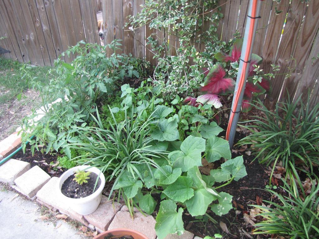 Monday Organize & Clean it : Start a garden