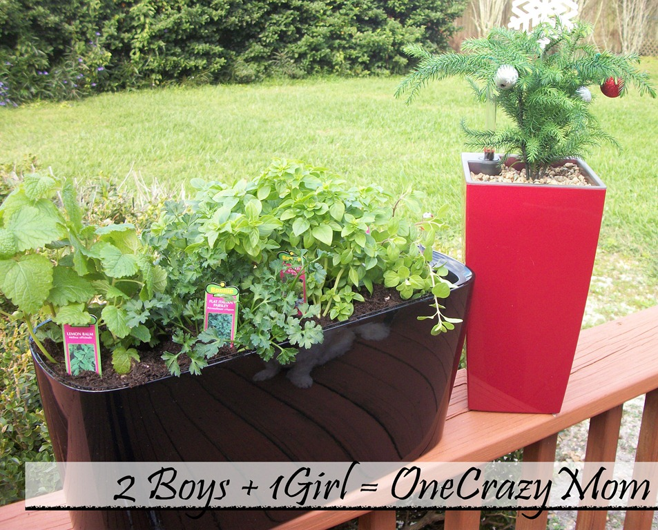 Lechuza planters a german innovation will even give you a green thumb review 2 boys 1 girl - Lechuza self watering planter ...