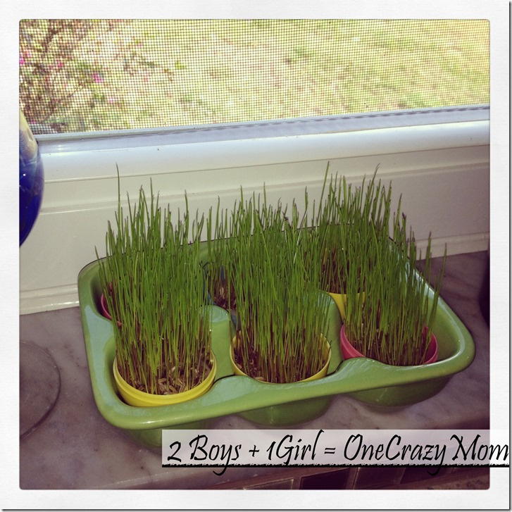 Easter Fun Craft for thekids grow your own Easter Egg Grass 2
