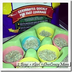 Easter Fun Craft for thekids grow your own Easter Egg Grass 4