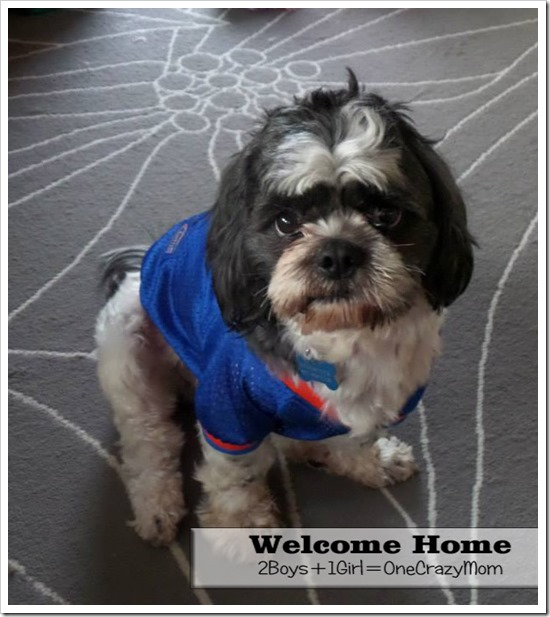 WELCOME HOME WOODSTOCK