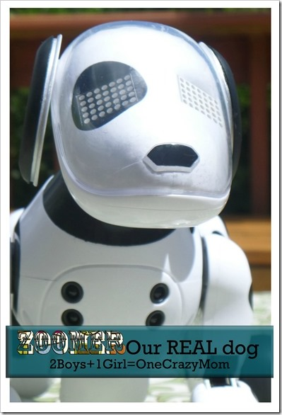 Zoomer the robo dog #Giveaway