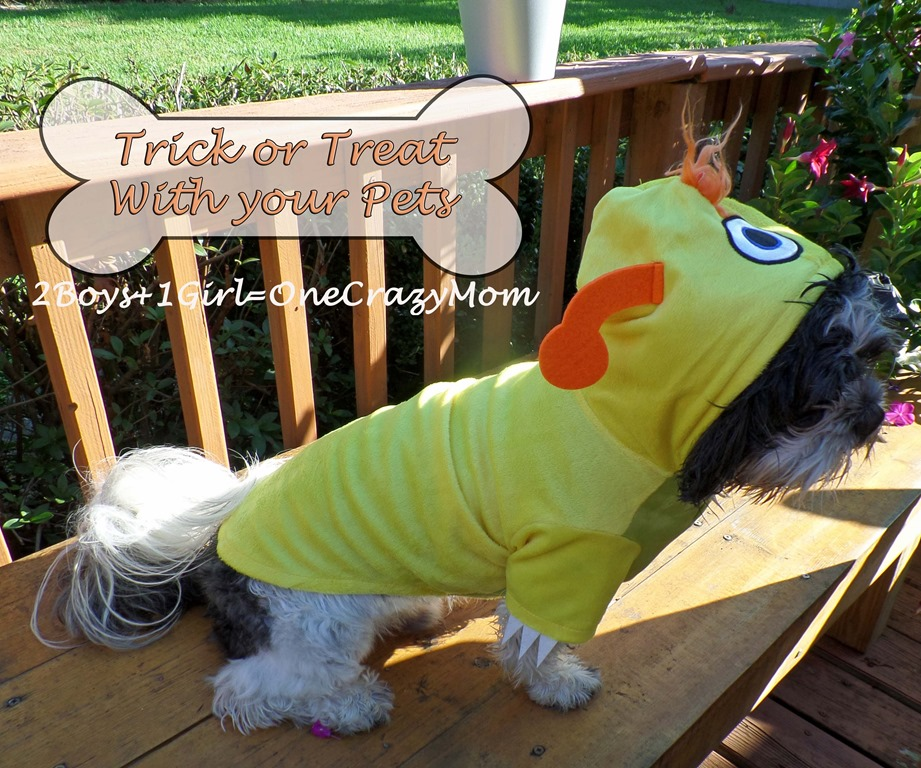Have fun Trick or Treating with your pets at PETSMART