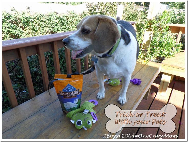 Dog Trick Or Treating Petsmart