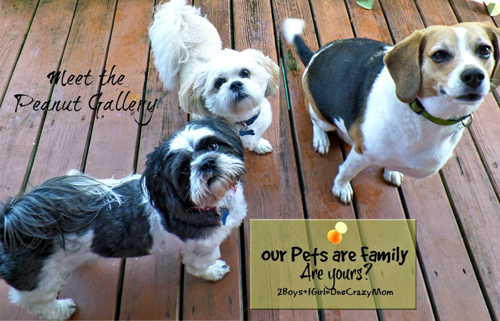 Our Fur Babies are Family ~ Are yours? #WalgreensRX isn't just for Humans and has your sick pet covered too #shop