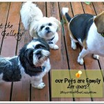 Our Pets are Family are yours #WalgreensRX will keep themhealthy #ad #CollectiveBias