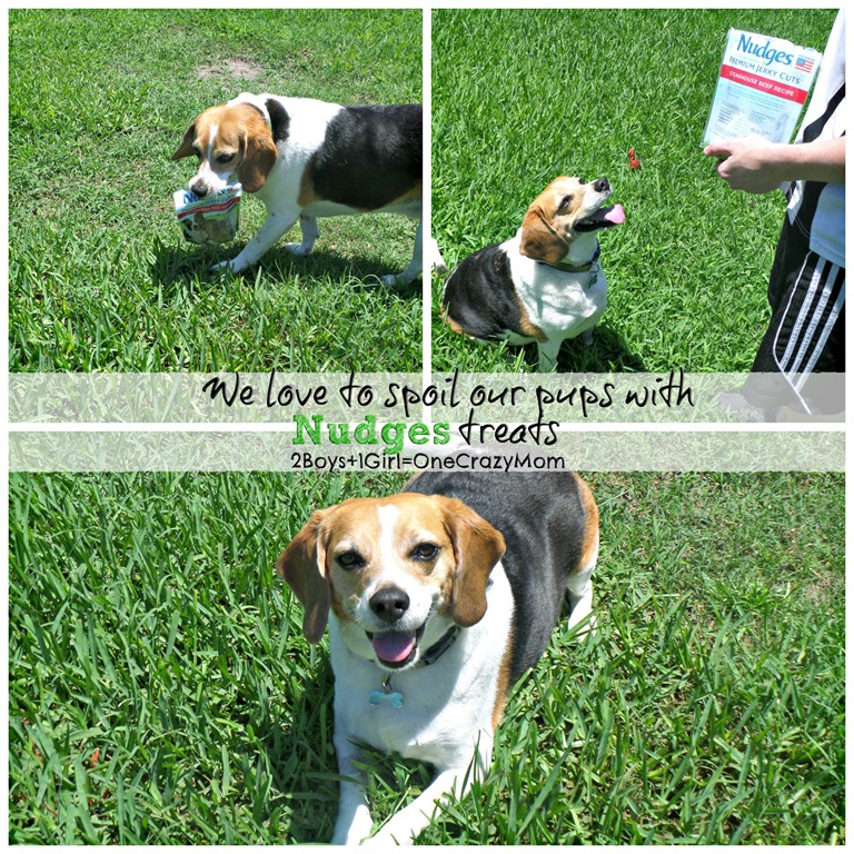#ad Come check out some of our #NudgesMoments with our Peanut Gallery and all about Pet Safety during the dog days of summer