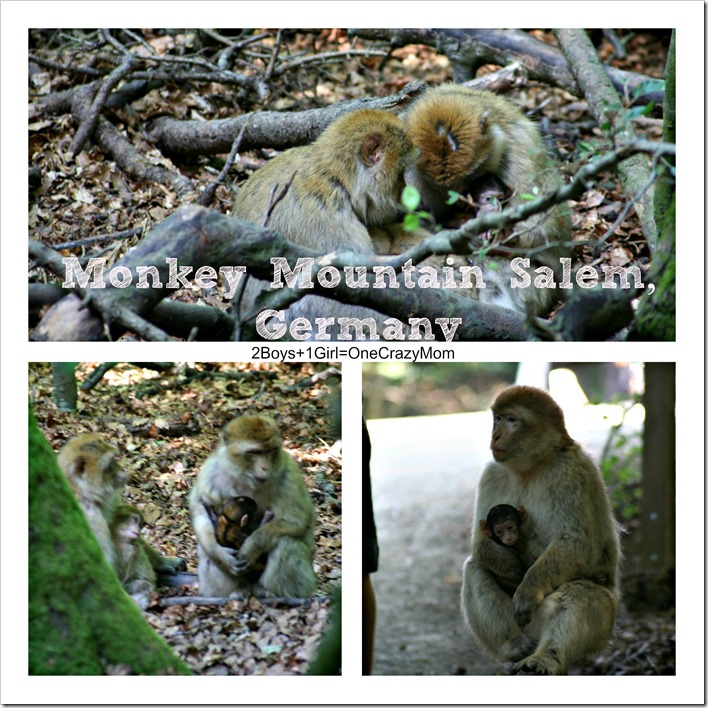 If you are a Monkey Lover you need to visit Affenberg Salem am Bodensee in Germany #Travel