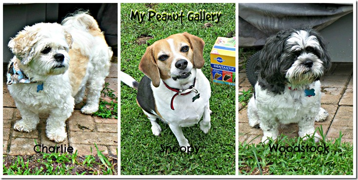 My Peanut Gallery loves their plain dog treats did you know #PedigreeGives to shelters? #shop