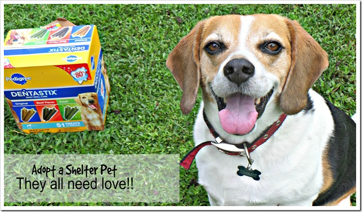 My Peanut Gallery loves their plain dog treats did you know #PedigreeGives to shelters?