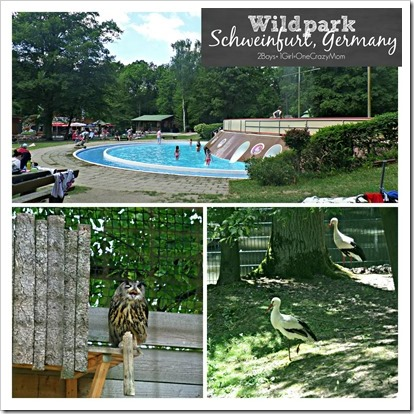 So much fun at the Wildpark in Schweinfurt Germany copy