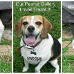 Meet-my-Peanut-Gallery-_SeekandStash-_ad.jpg