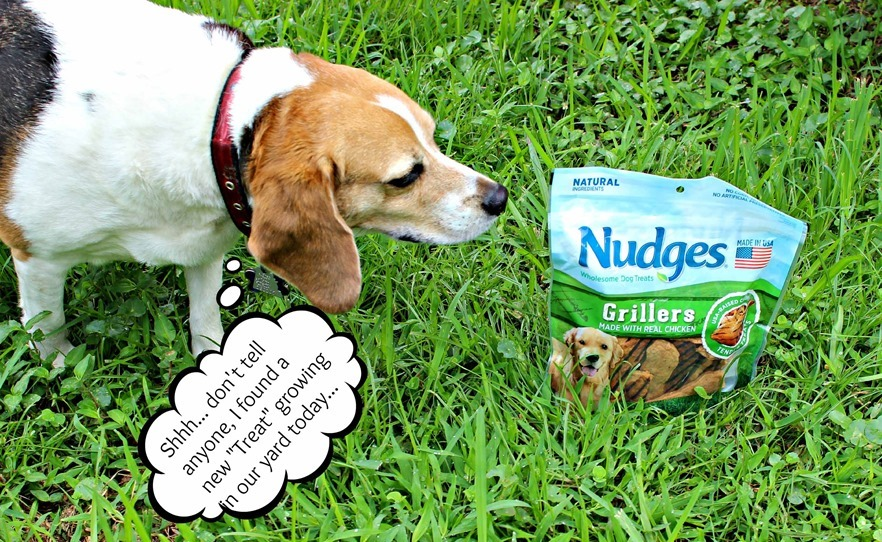 #NudgeThemBackis a perfect summer time treat for your pup
