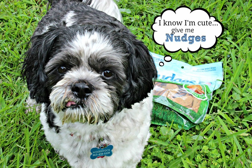 make your pup happy #NudgeThemBack