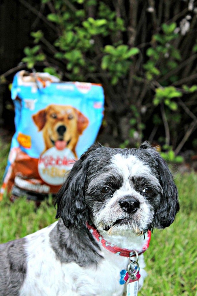 Dinner time is always a fun time at our house #DogOwnerKnows #ad