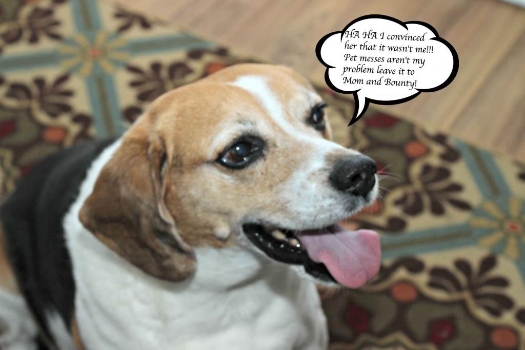Have a dog mess #QuickerPickerUpper can help