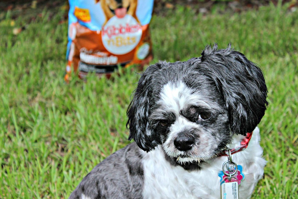 We only feed the best #DogOwnerKnows #ad