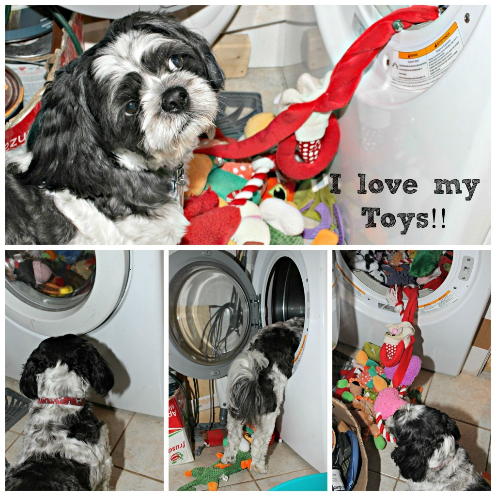 So what I love my toys #Dogs
