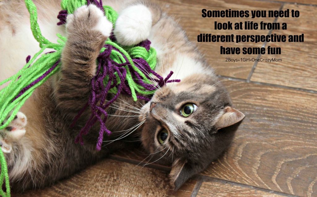 Simple DIY Cat Toys for hours of fun