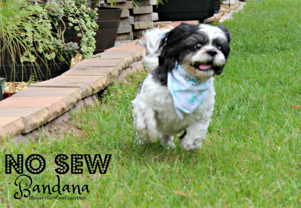 Create my No Sew Bandana to get your Dog ready for Spring